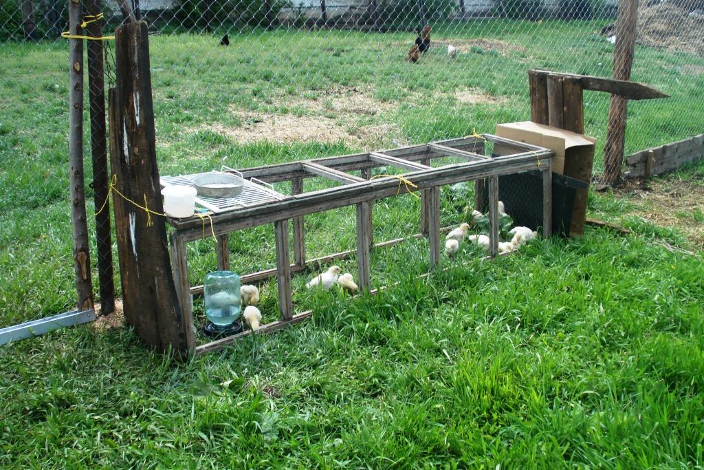 Как сделать загон для куриц